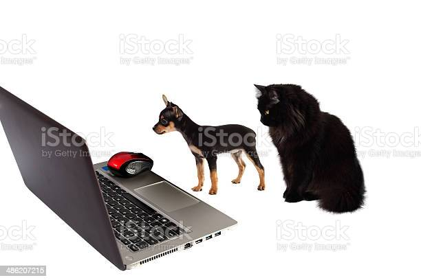 Dog puppy with cat in front of laptop on white picture id486207215?b=1&k=6&m=486207215&s=612x612&h=t rdsn4ulr eub8c4qroasik4 zc2b iaqtj2nexyoa=
