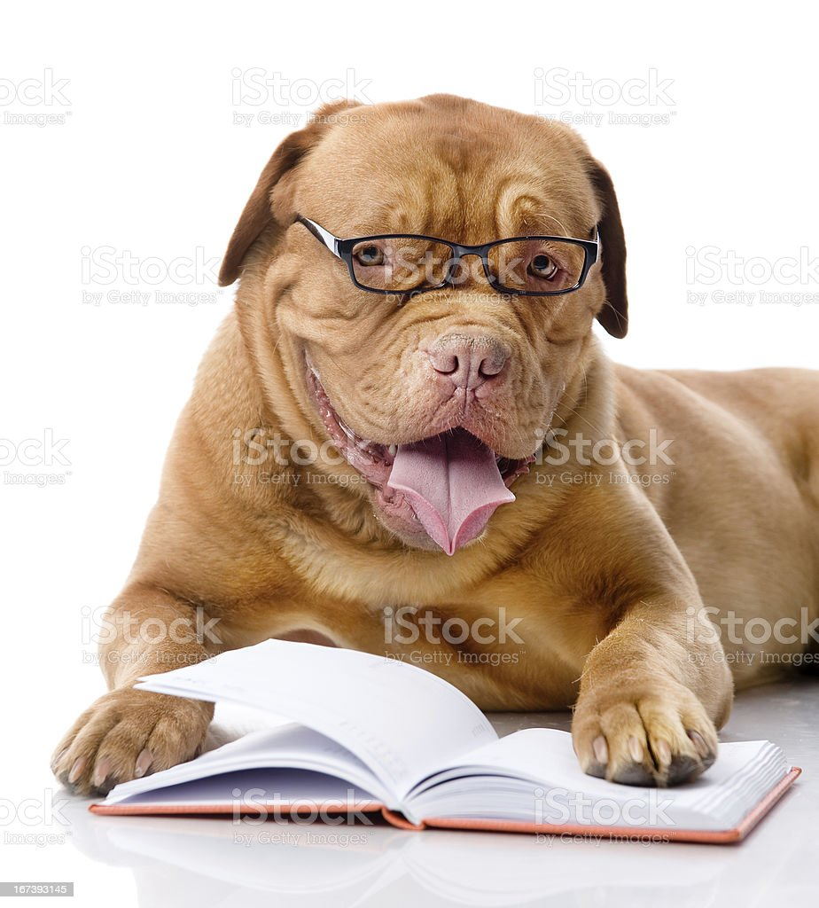 dog read book royalty-free stock photo