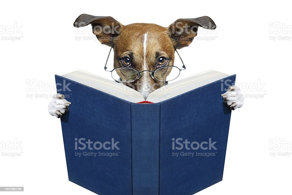 dog reading a blue book royalty-free stock photo