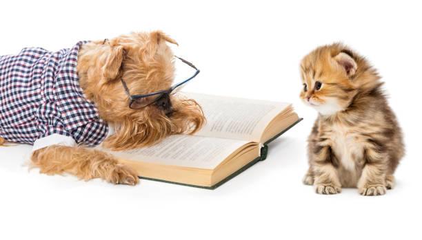 Dog reading a book little kitten picture id884073240?b=1&k=6&m=884073240&s=612x612&w=0&h=a0jd4i vxqllmwcmf0jegcwyozltzxaeval12 i14qk=