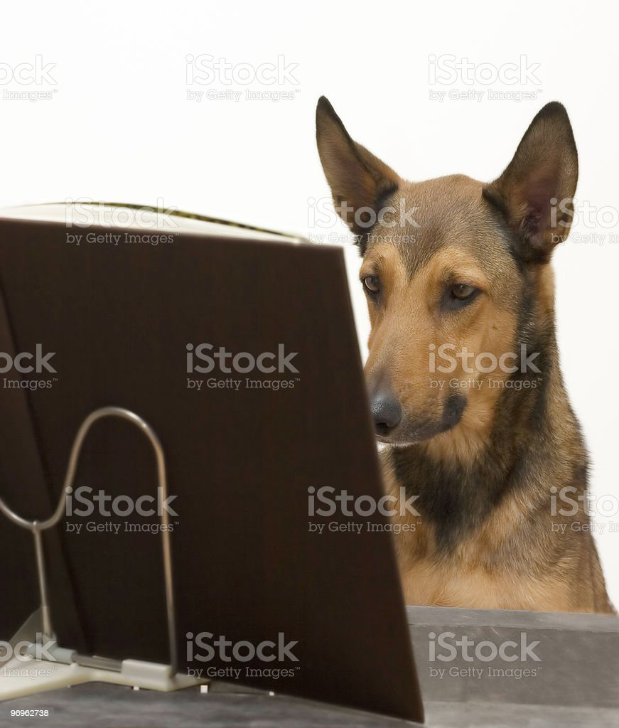 Dog Reading Book royalty-free stock photo