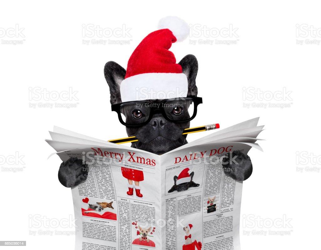 dog  reading newspaper on christmas holidays stock photo