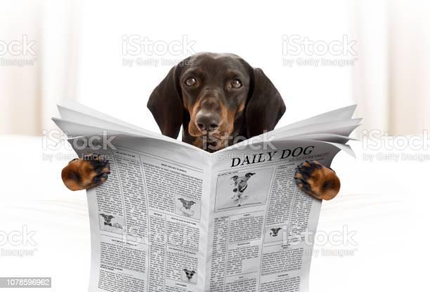 Dog reading newspaper picture id1078596962?b=1&k=6&m=1078596962&s=612x612&h=yggc f18kq1z6bn60gybmbmsikvpy4haxv2wcsjwiqu=