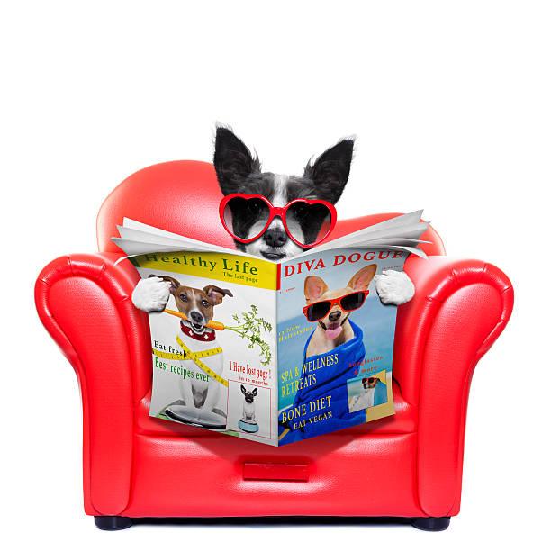 hund liest zeitung - coole liebessprüche stock-fotos und bilder