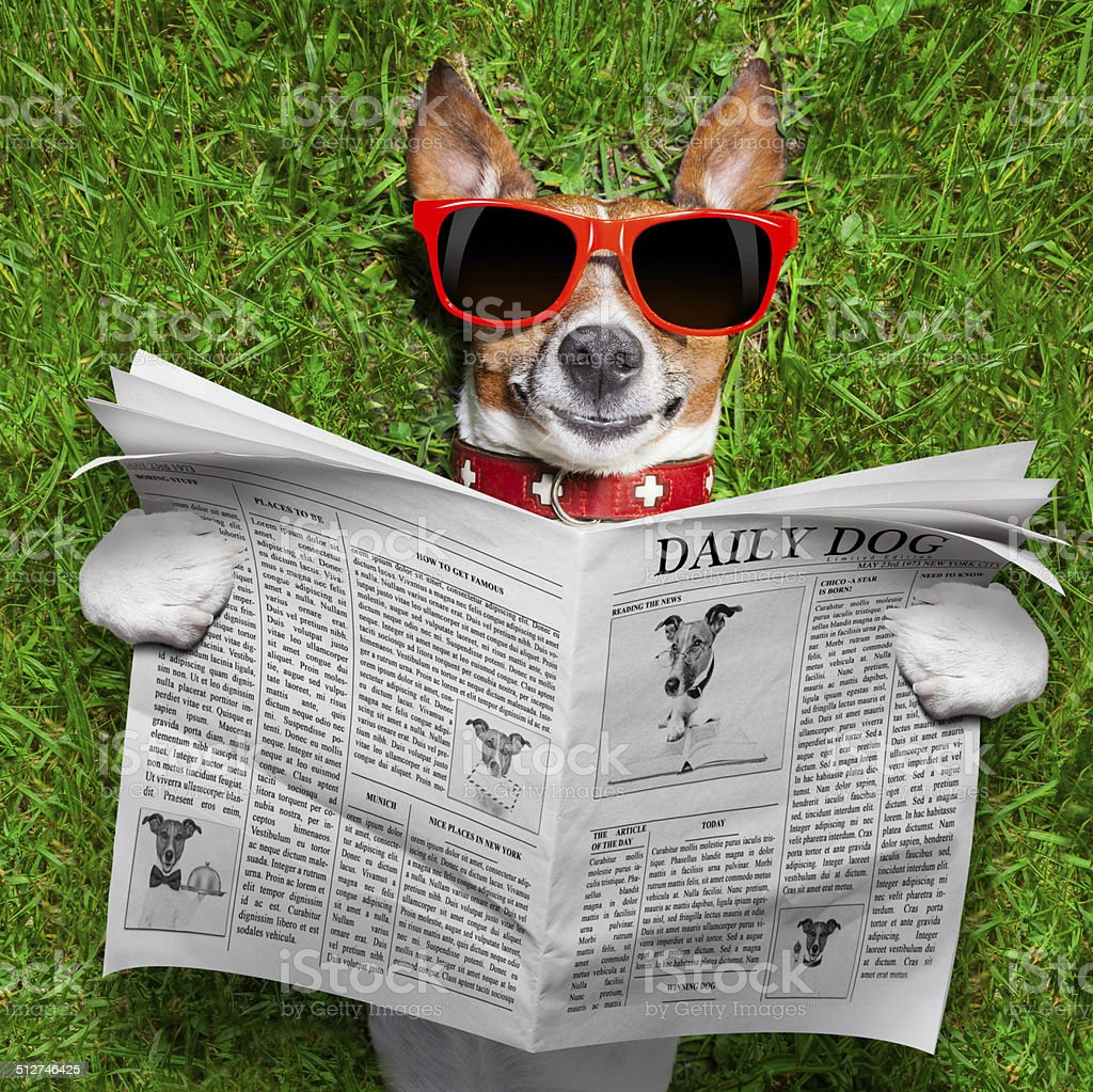 dog reading newspaper stock photo