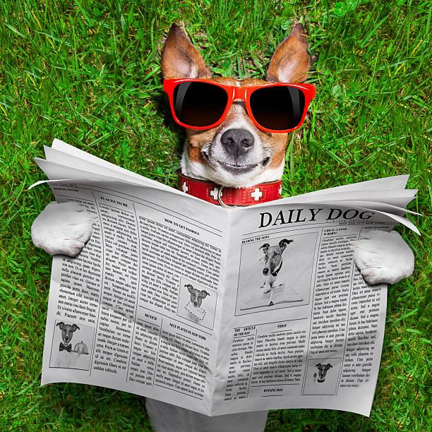 hund liest zeitung - zeichen lesen stock-fotos und bilder