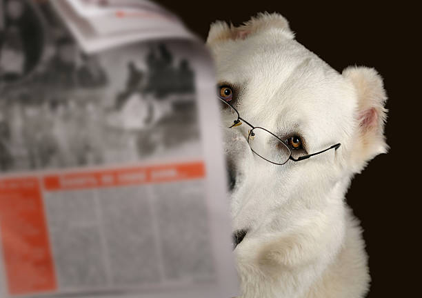 Dog reading newspaper with glasses stock photo