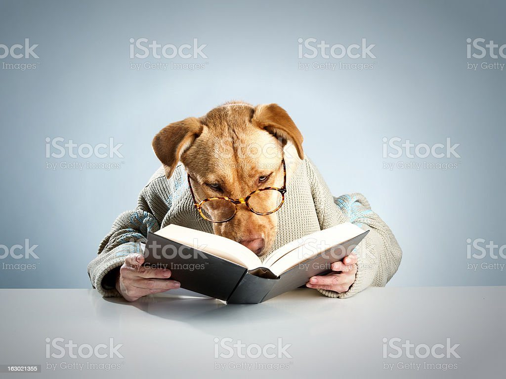 Dog reading stock photo