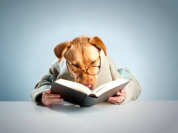 hund lesen - humor bücher stock-fotos und bilder