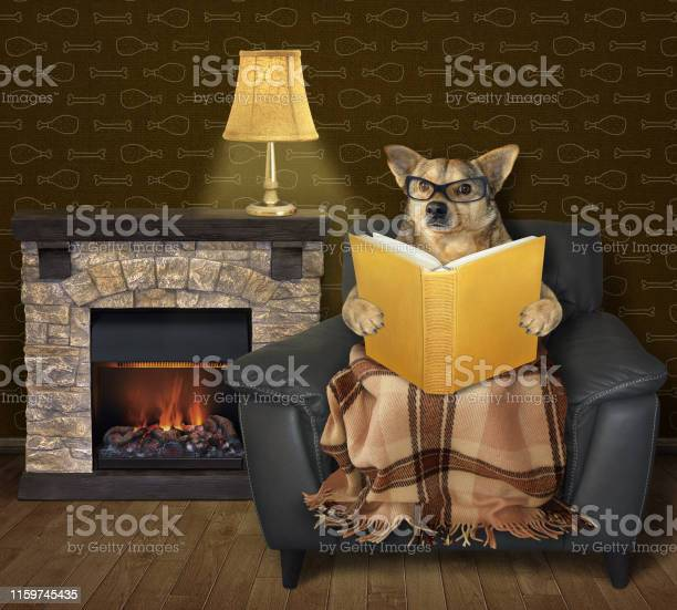 Dog reads a book near a fireplace picture id1159745435?b=1&k=6&m=1159745435&s=612x612&h=rwhb4mzb 2wijyyv0jzswhmvnmzstyxl8 awuil6l08=