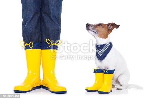885056264istockphoto dog ready for a walk in rain 531988083