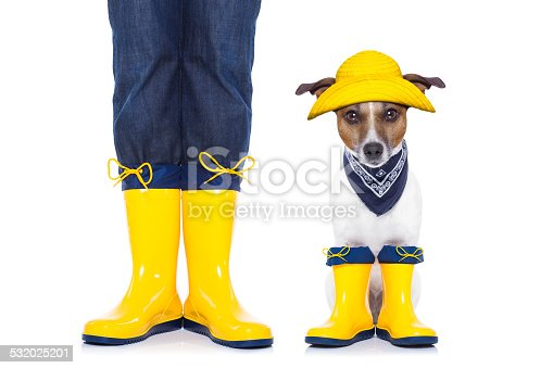 885056264istockphoto dog ready for a walk 532025201