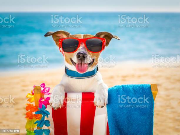 Dog realxing on beach chair picture id667787128?b=1&k=6&m=667787128&s=612x612&h=80tuawulve30hmoym4uevwp pm7yklv4iahw2bnamg4=