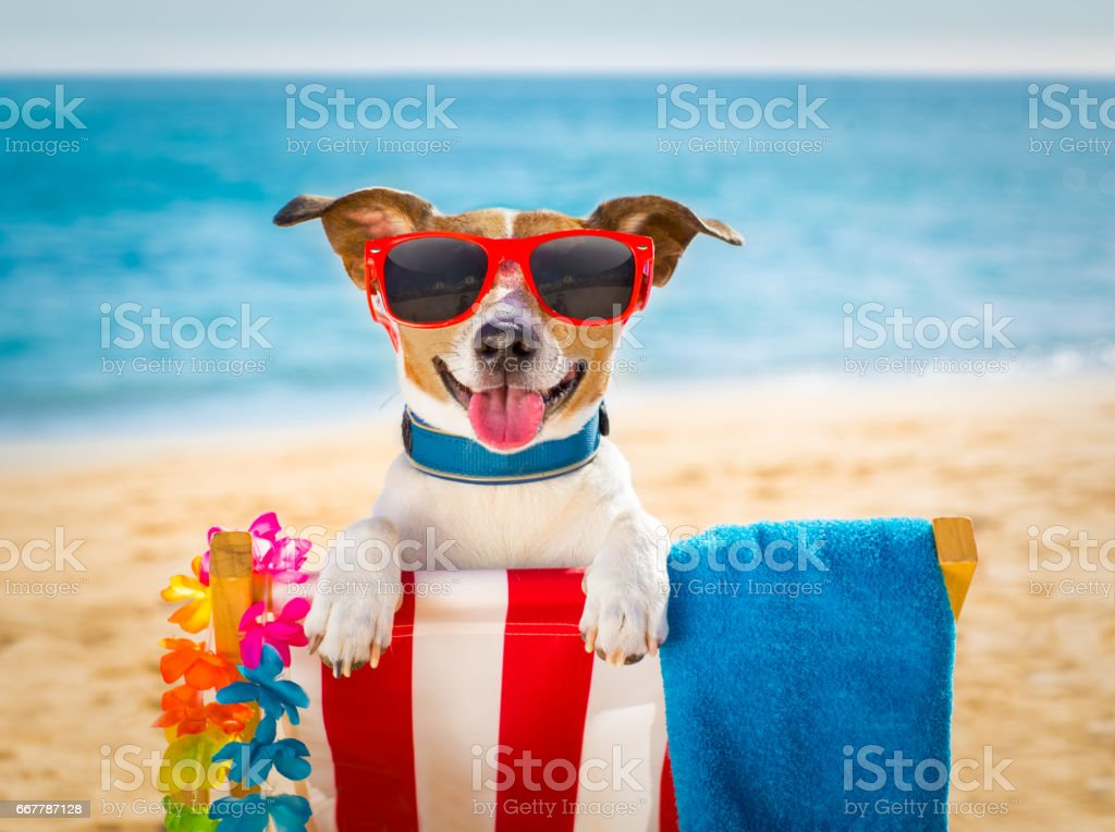 dog realxing on beach chair stock photo