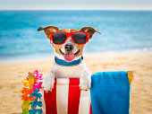 dog realxing on beach chair