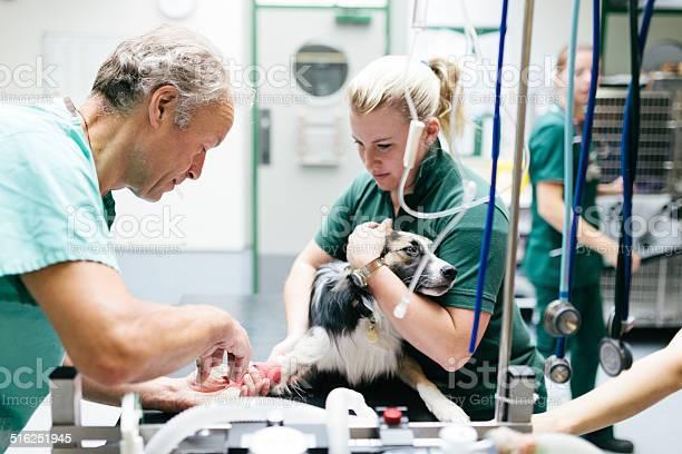 Dog receiving anaesthetic picture id516251945?b=1&k=6&m=516251945&s=612x612&h=exbqh2rwnrkphqte y7uffuskpxtaq 7jc4zj7lf8am=