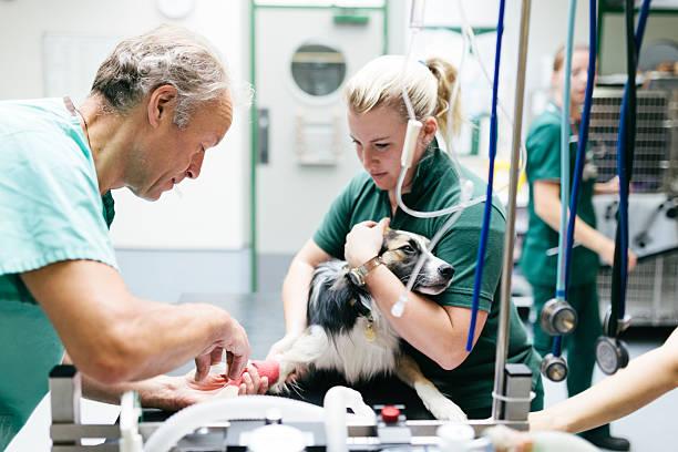 Dog receiving anaesthetic picture id516251945?b=1&k=6&m=516251945&s=612x612&w=0&h=dputoyj n2fkeitio9lrnzqmezbmbawazmshntofbhw=