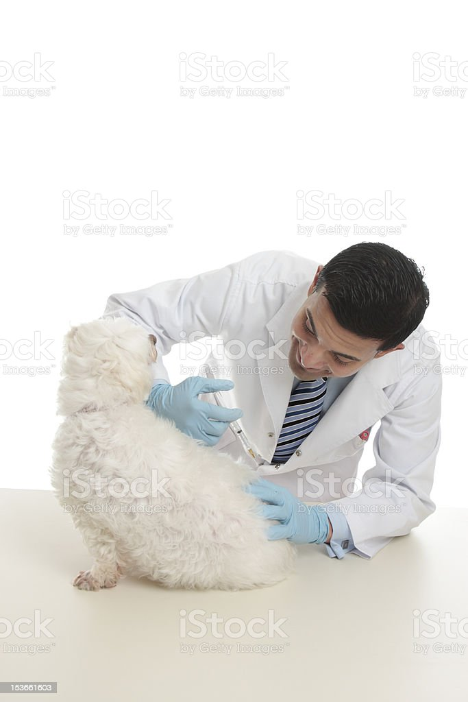 Dog receiving medicine or vaccination royalty-free stock photo