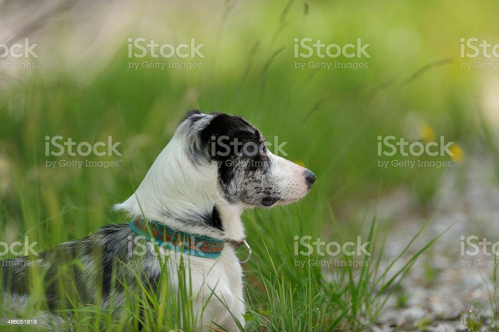 Perro de descansar en la sombra, alerta buscando algo - foto de stock