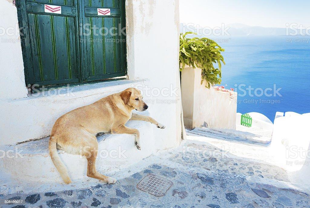 Dog resting in shade on Santorini, Greece. royalty-free stock photo