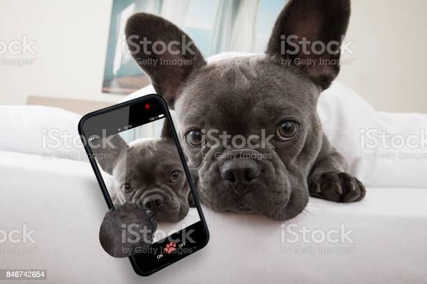 Dog resting on bed at home picture id846742654?b=1&k=6&m=846742654&s=612x612&h=a0 lwql8aoj6vpcigjge4izrur vyfrpwd2ut1ajrnu=