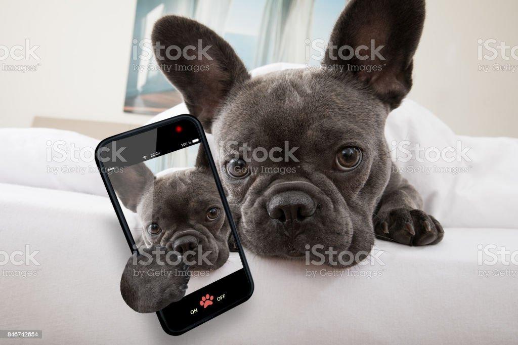 Hund ruht auf Bett zu Hause – Foto