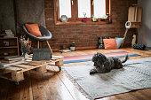 Dog resting on the carpet