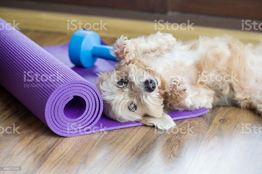 dog resting on yoga mat stock photo