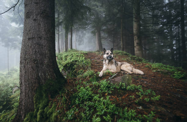 Dog rests on the path in the mystical forest. stock photo