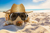 dog retired at the beach