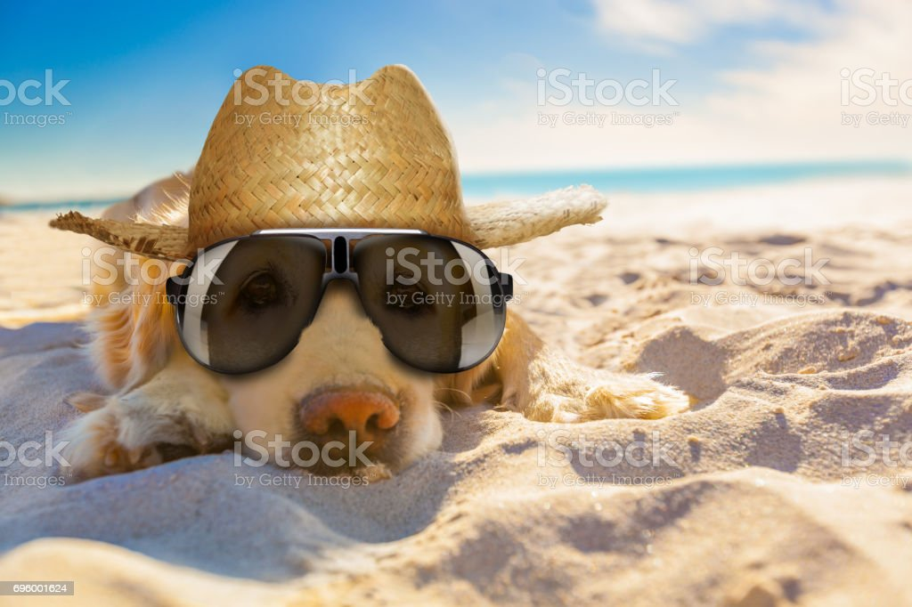 dog retired at the beach stock photo