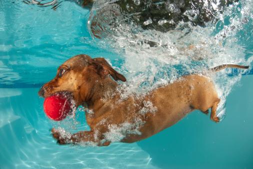 dog retrieving ball underwater