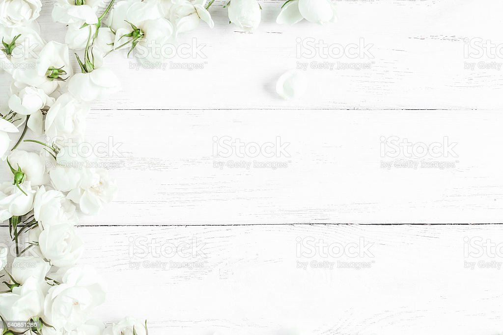 dog rose flowers on white wooden background, frame stock photo
