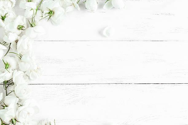 dog rose flowers on white wooden background, frame - holzblumen stock-fotos und bilder