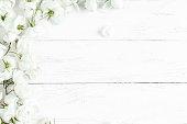 dog rose flowers on white wooden background, frame