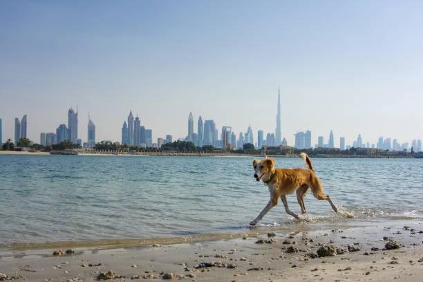 Hund am Strand entlang laufen – Foto