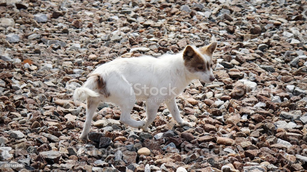 A dog running around the gravelly field. stock photo