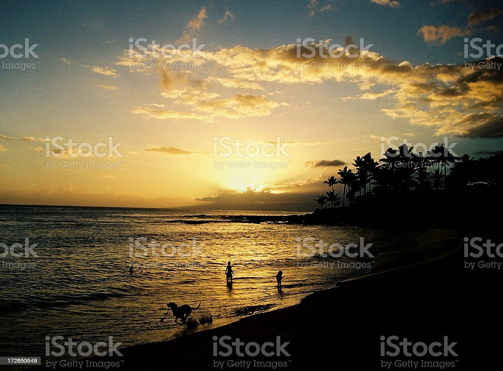 Dog running at sunset on Hawaii beach royalty-free stock photo