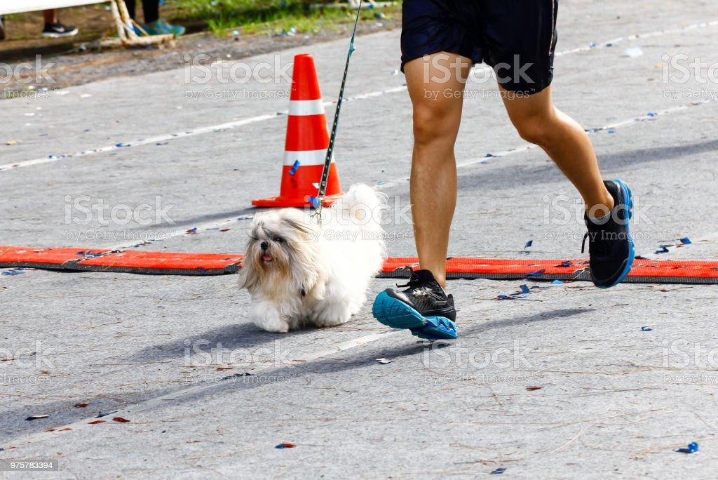 Hund läuft beim Marathon - Lizenzfrei Ausdauer Stock-Foto