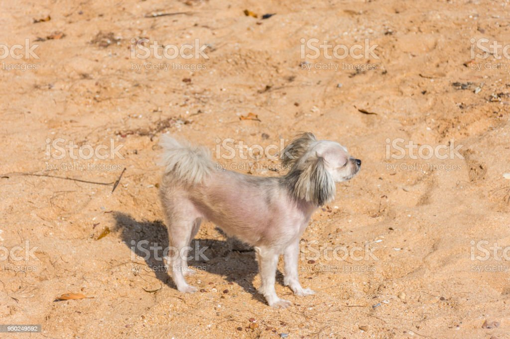 Dog running happy fun on beach when travel at sea stock photo