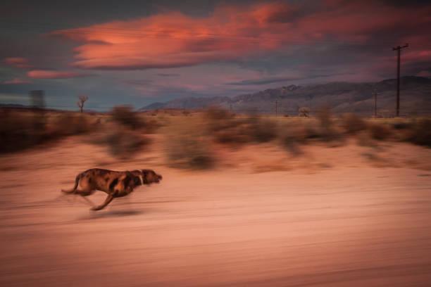 Dog Running Into the Sunset stock photo