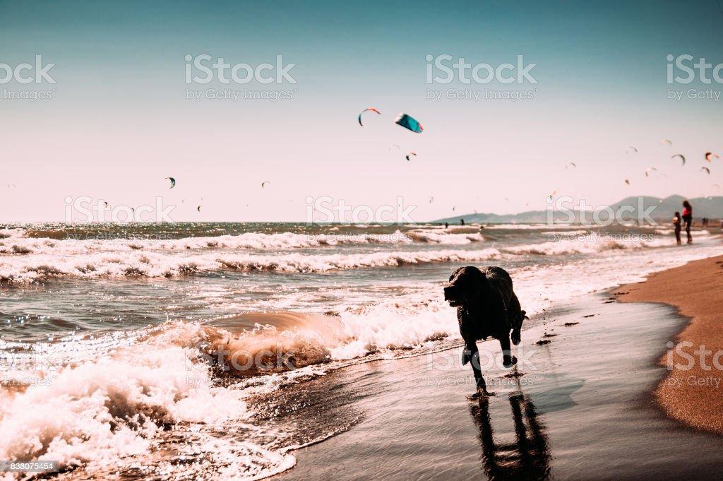 Hund am Strand, in der Nähe von Meer. – Foto
