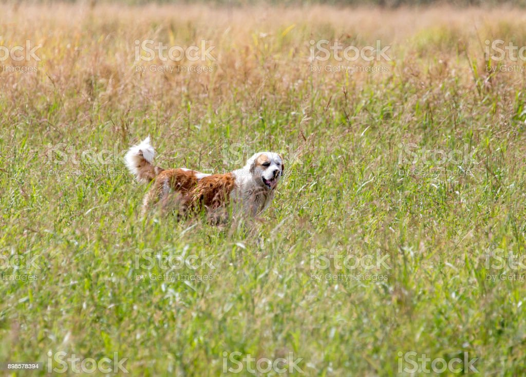 Dog running on grass outdoors stock photo