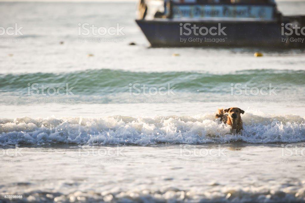 dog running on the beach, water spashing stock photo