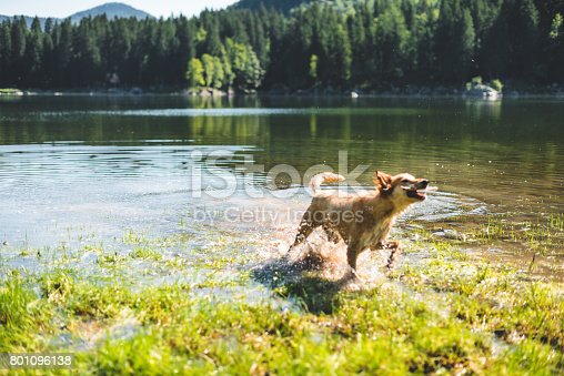dog running on the lake