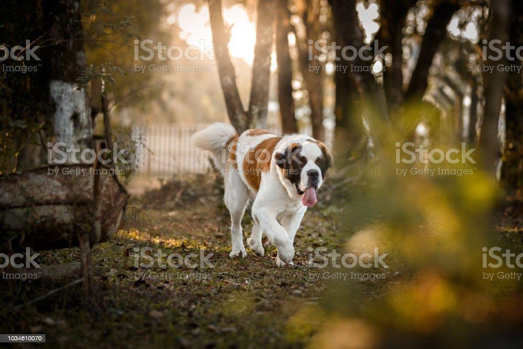 Hund läuft außerhalb – Foto