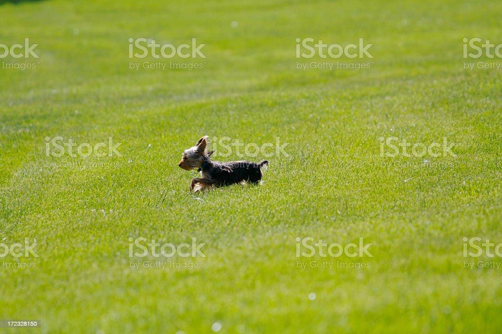 Hund Laufen – Foto