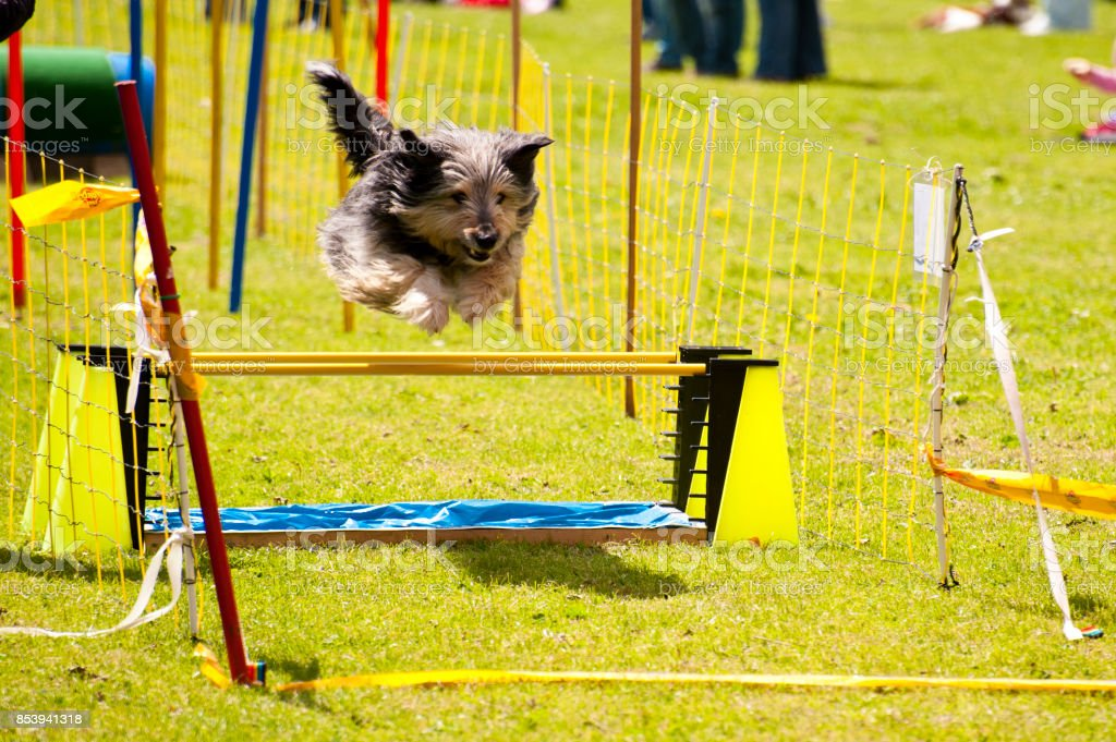 Chien de course - Photo