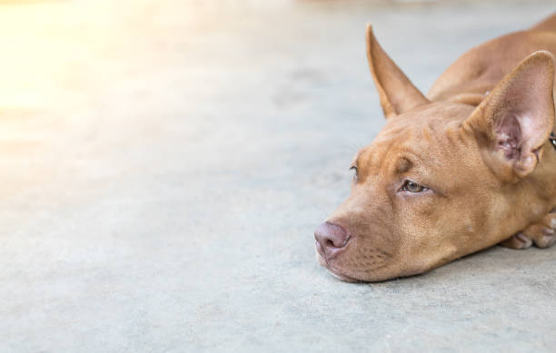 dog sad,dog hungry,a lonely dog on a cement floor. - cement floor stock photos and pictures
