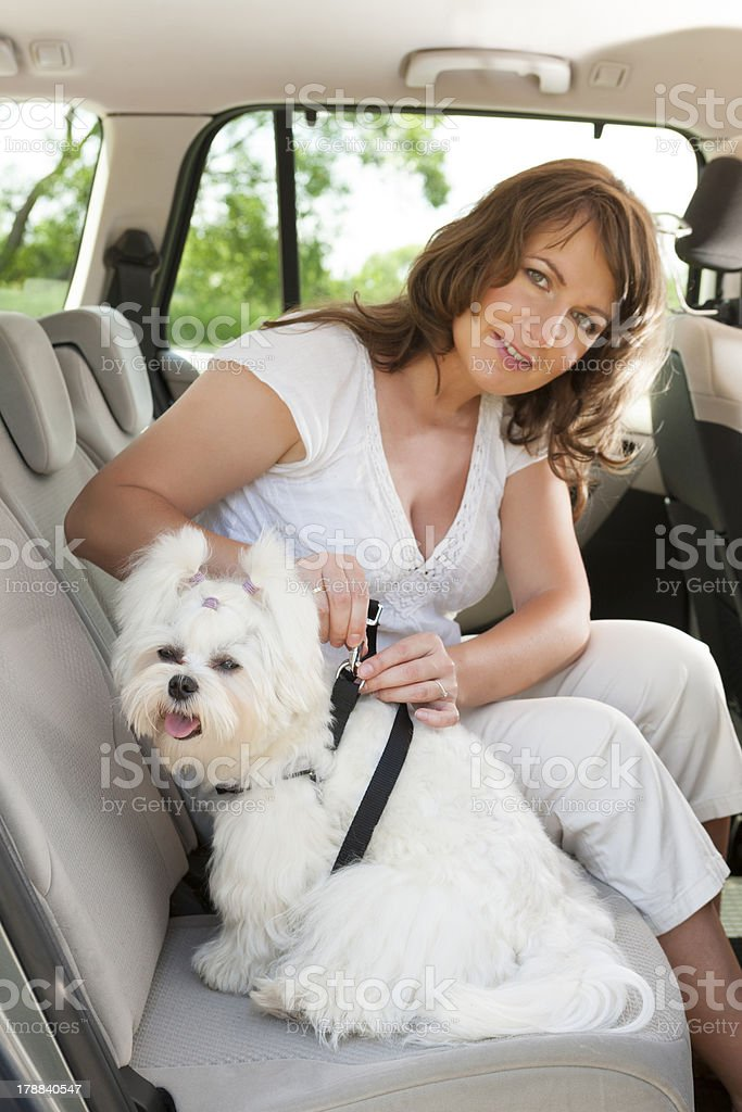 Dog safe in the car royalty-free stock photo